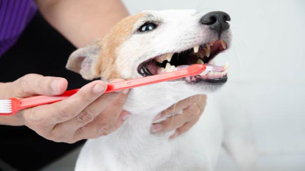 pet dental hygiene tips from university veterinary hospital in berkeley california